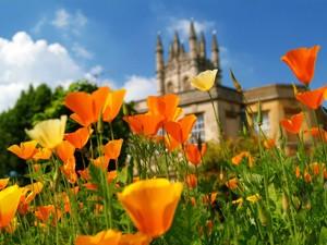 Oxford Botanic Garden - Tulips