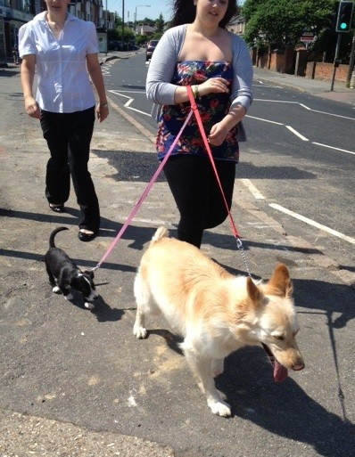 Hannah takes over the dog walking seamlessly
