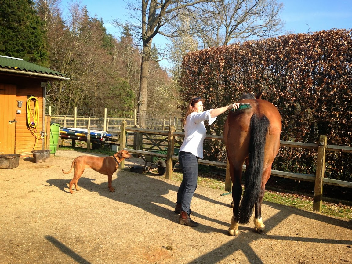 Grooming and caring for the horses is an essential daily routine.