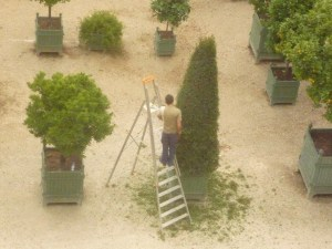 Manicuring the topiary at Versailles