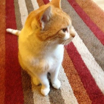 cat sitter, catsitter, pet sitter, petsitter