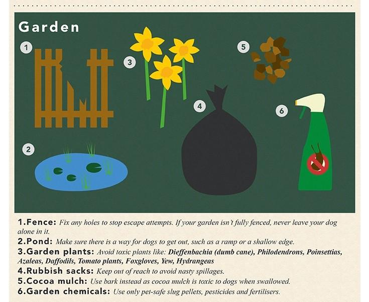 Sainsburys Bank - Dog Safe Home - The Garden