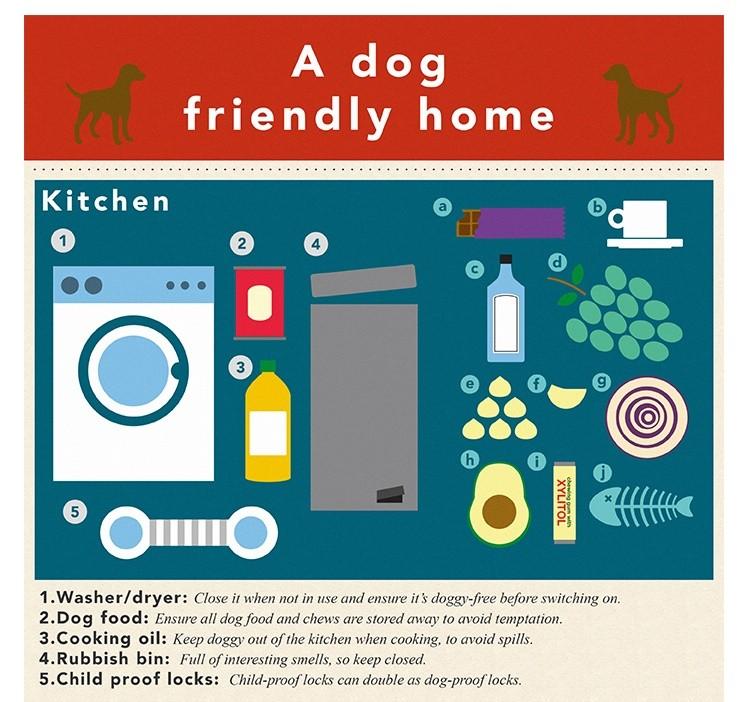 Sainsburys Bank Dog Safe Home - The Kitchen