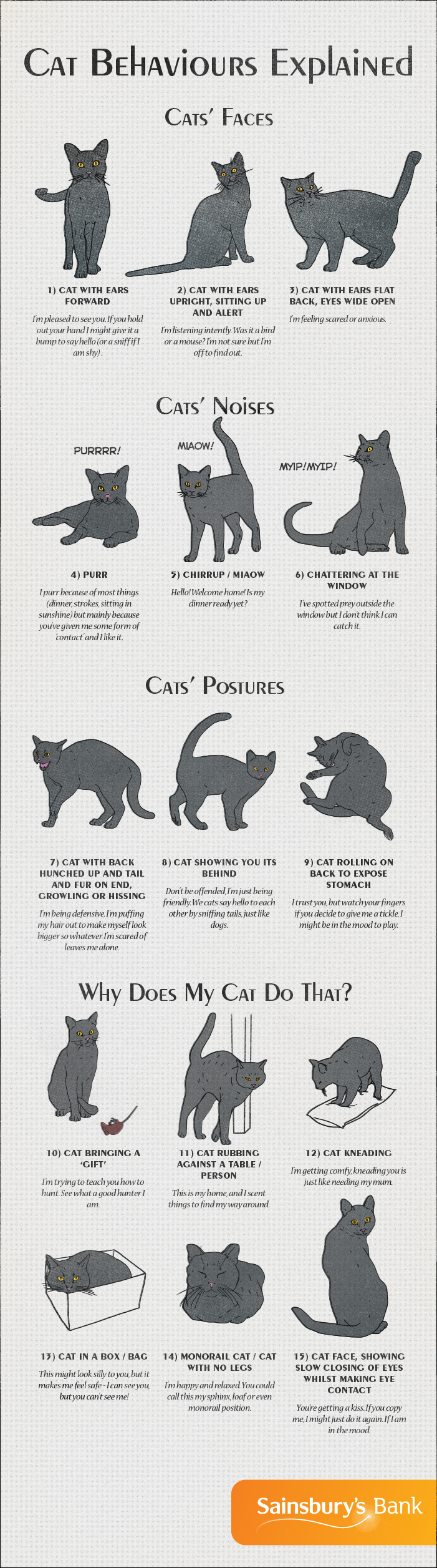 Cat behaviour guide by Sainsbury's Bank