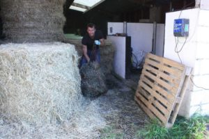 Preparing haylage