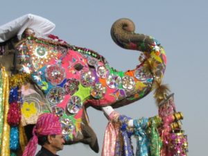 Highly decorated Indian elephant with raised trunk