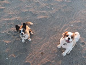 Photo of cute little dogs