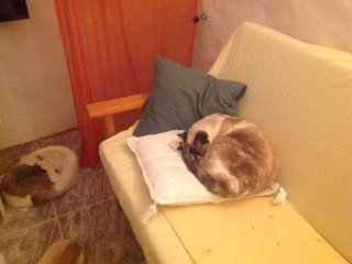 Pets curled up on sofa and cushions in living room 2016
