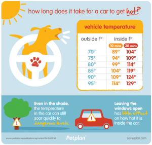 Pet-plan-guide-caring-for-pets-in-the-summer-300x286