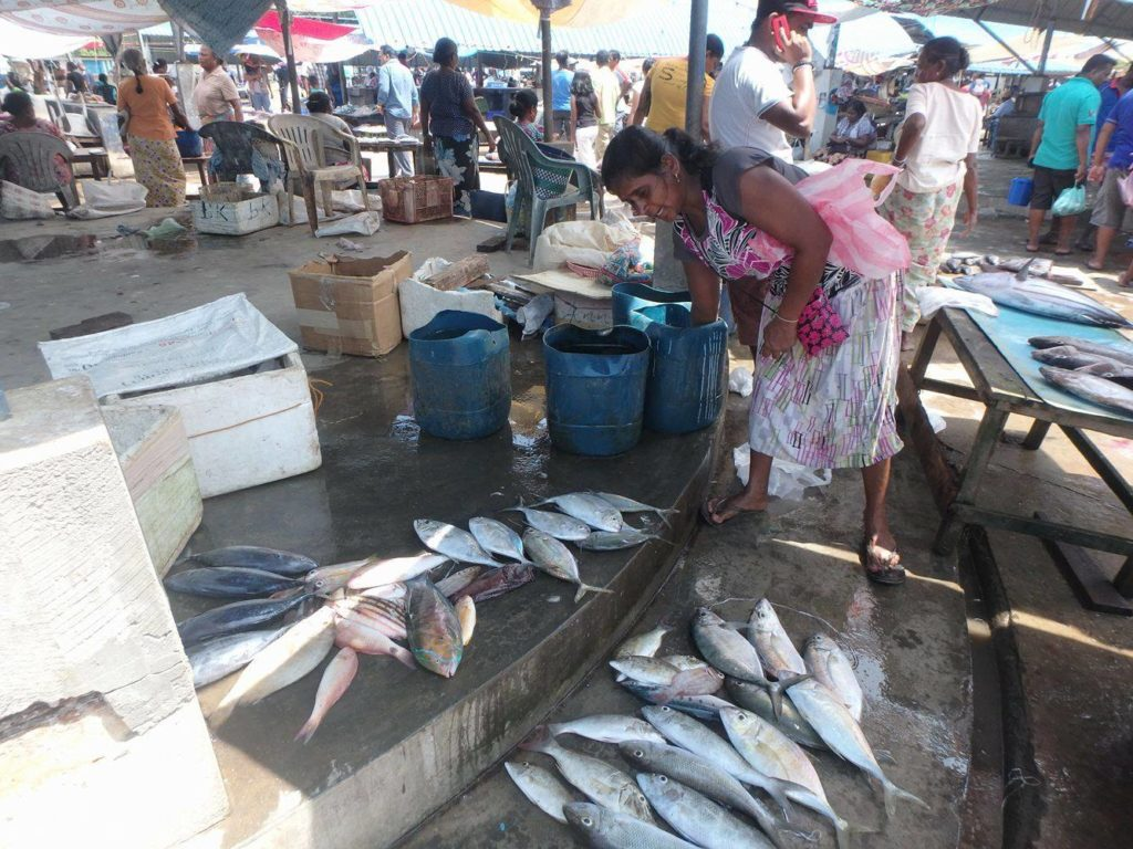 Catch of the day at the fish market in Nagobo, Sri Lanka