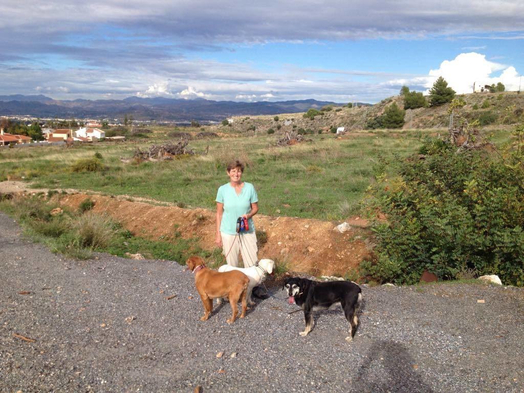 SHIRLEY CROWTHER WILKINSON In SPAIN TAGARDINA Walking Dogs