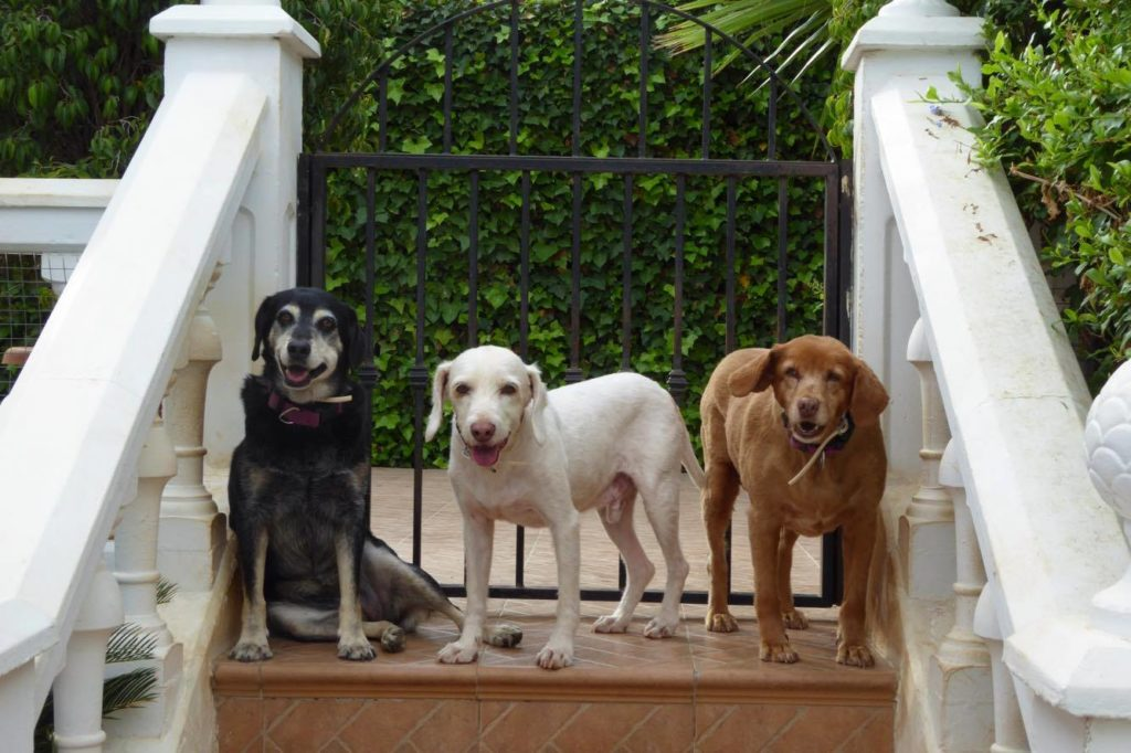 SHIRLEY CROWTHER WILKINSON in Spain Tagardina 3 dogs