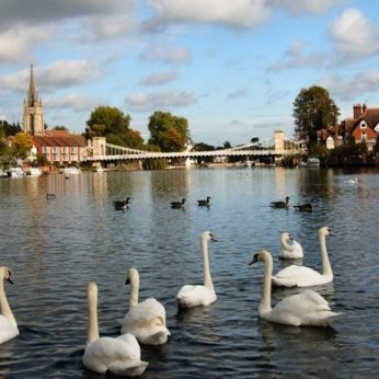 New housesitter petsitting in Marlow