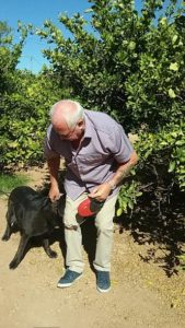 Man with standing black labrador, one half of the retired couple
