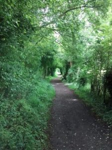 Pathway with arched trees