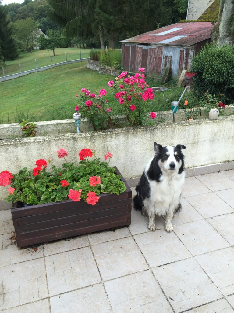 housesitting il de france - here's Duke the oldest dog