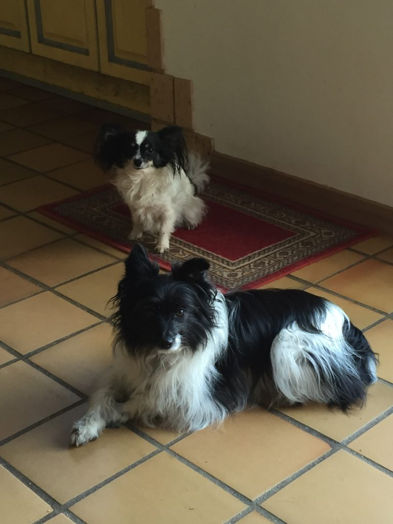 housesitting il de France - dogs Flea and Barry