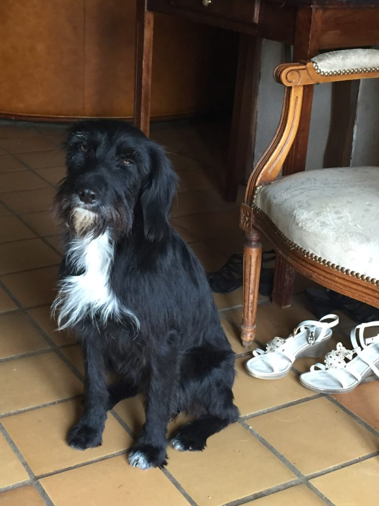 housesitting ile de france, Perle the rescue dog