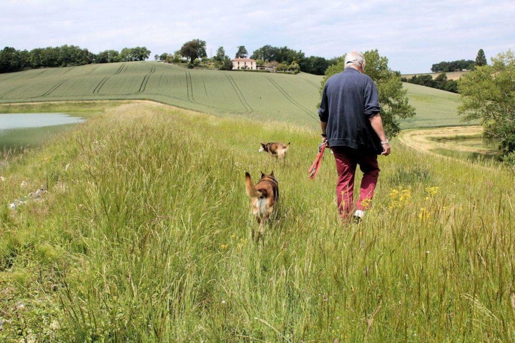 about housesitting - Mike walking the dogs
