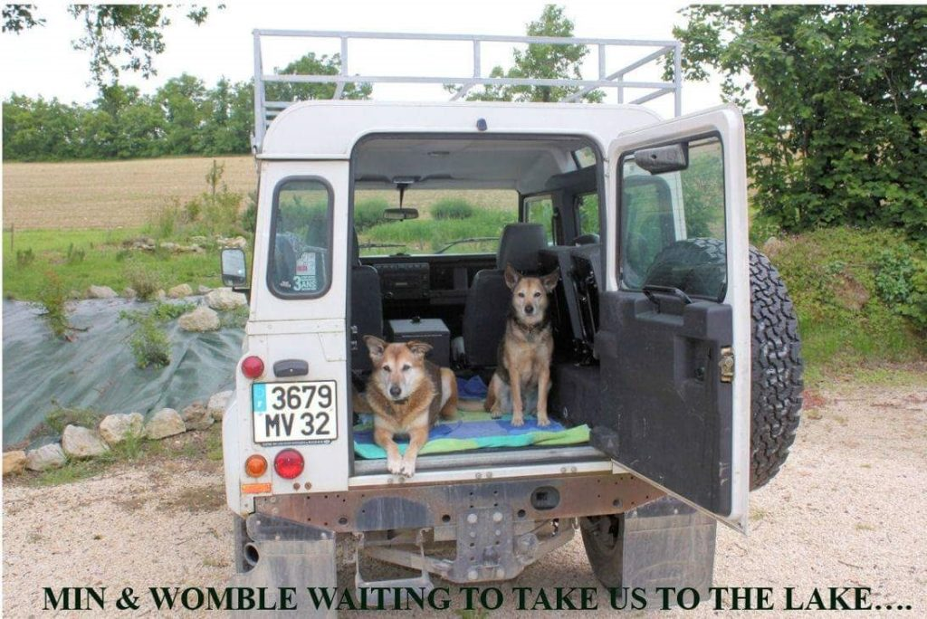 about housesitting - the dogs wait in the van to go to the lake