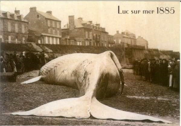 about housesiting - the unexpected included a whale skeleton in France