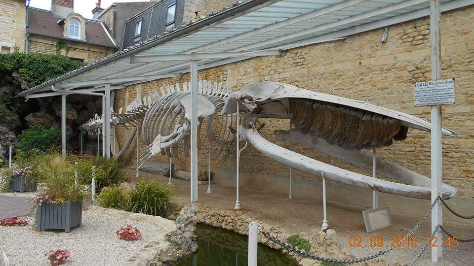 about housesitting - whale skeleton behind the mairie