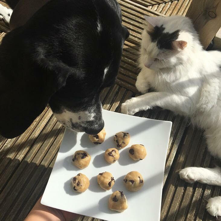 momoko-hill-cat-and-dog-looking-at-cookie-dough
