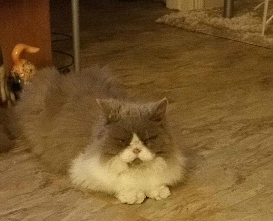 pet sitting Peabody