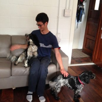 Alex the housesitting student caring for two spaniels