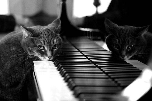 Cat resting his chin on the piano keyboard - housesit book review
