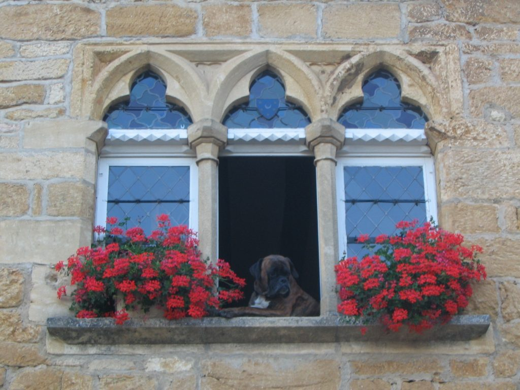 FREEIMAGES - Boxer in the Mullioned window - how-much-is-the-doggie-in-the-1547904