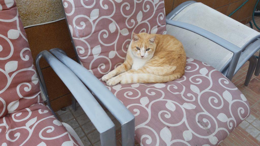 Catsitters TeresaKrelle Orihuela SPAIN Marmalade Cat on pink chair