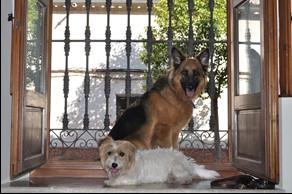 pet housesitting