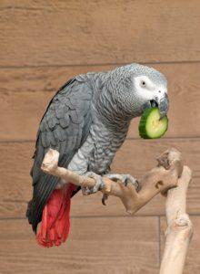 parrot sitting