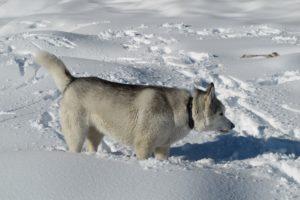 dog walker pet