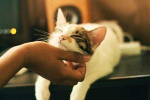new cat owner