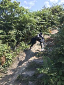 dogsitting in Cornwall