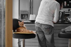 cat petsitter