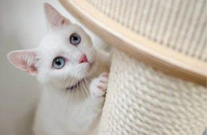 cat owner top tips