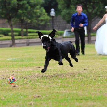 choosing the right dog sitter