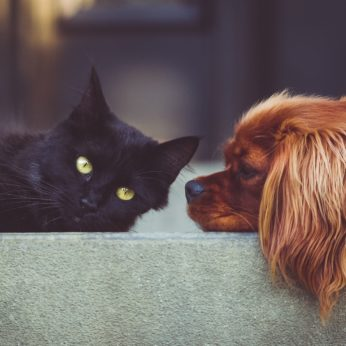 dog or cat
