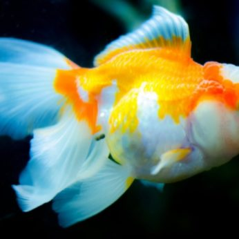 maintain a fish tank
