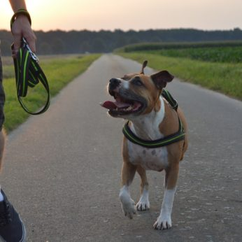 how to care for staffordshire terriers