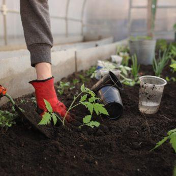 gardening tips