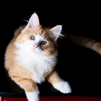 tips for cat sitting